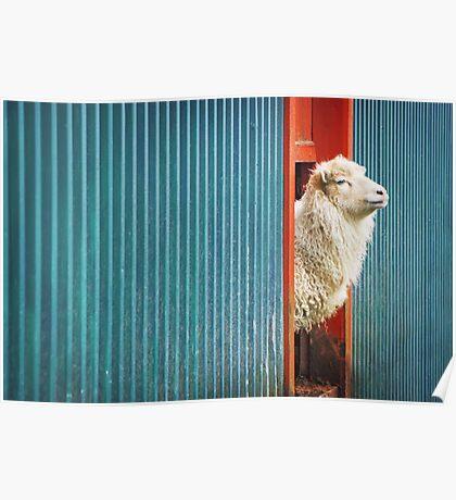 A Sheep Named DJ Poster