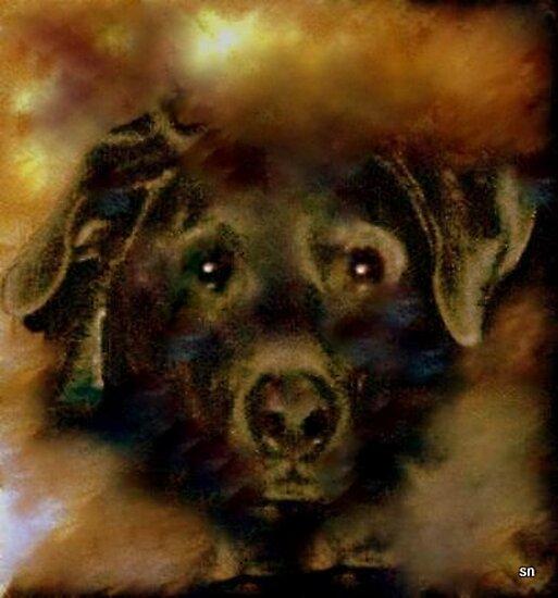 JADE-MY SPECIAL LAB by Sherri Palm Springs  Nicholas