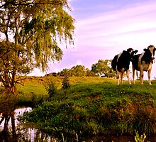 Cows on the Creek by Justin Showell