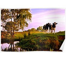 Cows on the Creek Poster