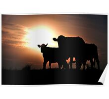 Cow Silhouette Poster