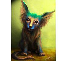 Colorful Dog Photographic Print