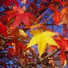Golden and red leaves by mltrue