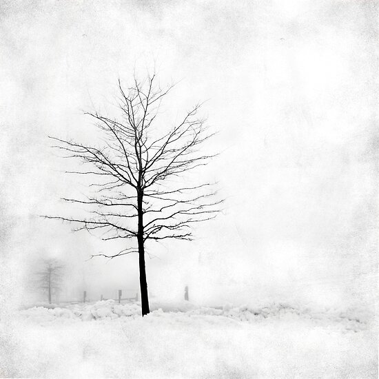 Snow Tree by Mary Ann Reilly