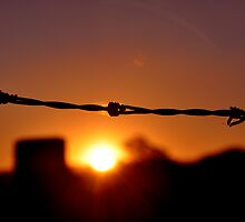 Barbed wire at Sunset by Justin Showell