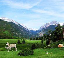 Colorado's Big Horn Sheep @ Sheeps Lake by NatureGreeting Cards ©ccwri