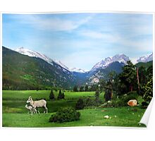 Colorado's Big Horn Sheep @ Sheeps Lake Poster