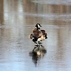 Canadian Goose...or Two?? by Alyce Taylor