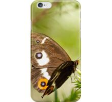 Varied Sword Grass Brown Butterfly iPhone Case/Skin