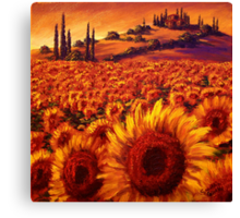 Wandering the Tuscan Sunflowers Canvas Print