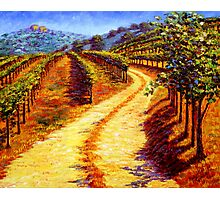 Sonoma Vineyard Photographic Print