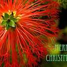 merry christmas by Cheryl Ribeiro