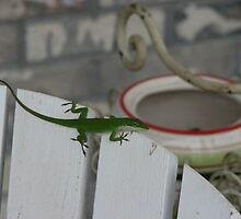 Love That Adirondack Anole! by JeffeeArt4u