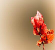 Ray of hope by SRana