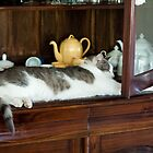 China Cabinet Cat by kwill