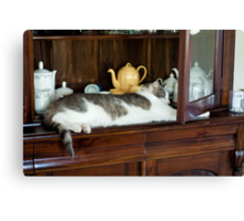 China Cabinet Cat Canvas Print
