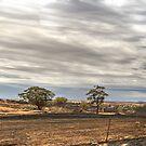 Fire # 2 by GailD