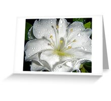 Azalea. Greeting Card