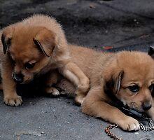 Street Pups - Bangkok, Thailand by Nicole Cultraro
