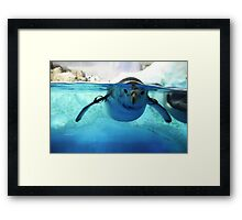 :: Penguin at Nagoya Aquarium :: Framed Print