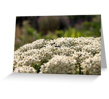Ants and flowers Greeting Card