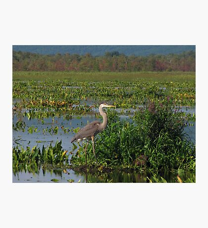 Precious Moments with Heron Photographic Print