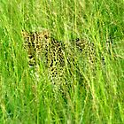 hues of green and yellow eyes - Karula by Pieter  Pretorius