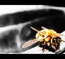 I, Bee by R-evolution GFX