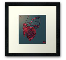 Butterfly Different Framed Print