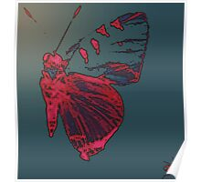 Butterfly Different Poster