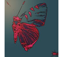 Butterfly Different Photographic Print