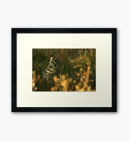 impulse and play - Karula Framed Print