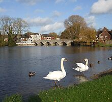 Fordingbridge by Christian Byrne Cook