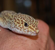 Gecko On The Hand by Jonice