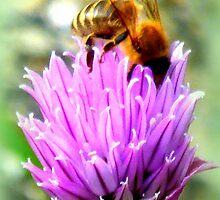 Bee on chive flower by ©The Creative  Minds