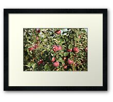 red apples on branches Framed Print