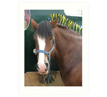 Equine Finery Art Print