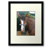 Equine Finery Framed Print