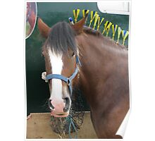Equine Finery Poster