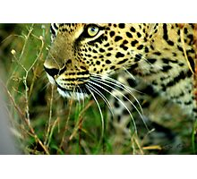 proximity and space - Karula Photographic Print