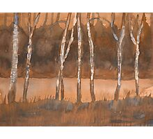 Birch Avenue Photographic Print