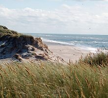 dune on the north sea by rondinara