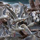 Gull Power by Martin Smart