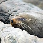 Sleeping Seal by davemorris05