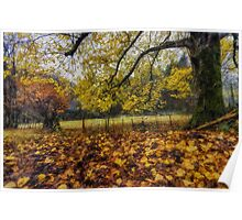 Under The Autumn Trees Poster