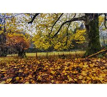 Under The Autumn Trees Photographic Print