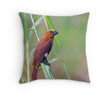 Thick-Billed Weaver Throw Pillow