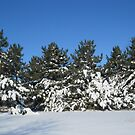 Winter Scene by Linda Miller Gesualdo