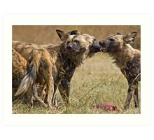 Wild Dogs Feeding Art Print