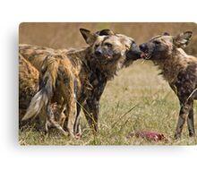 Wild Dogs Feeding Canvas Print